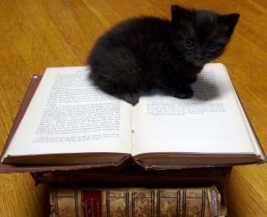 Kitty Books